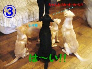 Photo_110