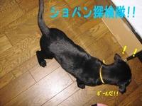 Photo_77